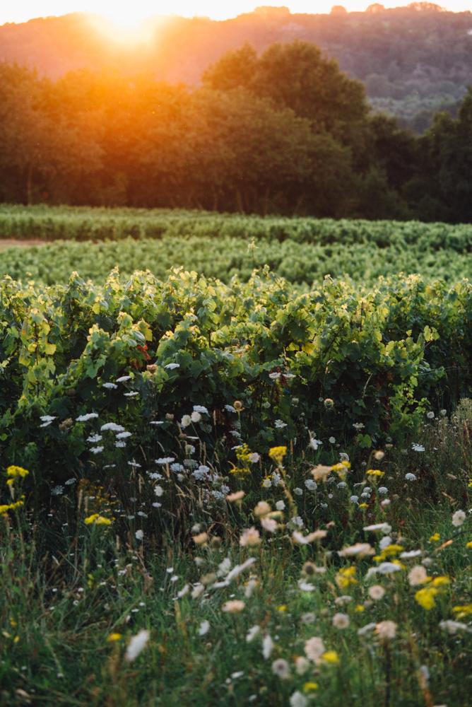 4 & 5 mai – Comme un air de printemps au Domaine