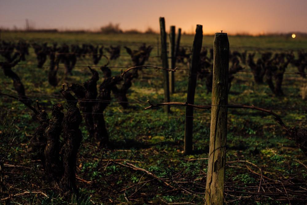 Un an dans les vignes, vin d'Anjou, Vins de Loire, Muscadet, Malvoisie, Coteau d'Ancenis, Crémant de Loire