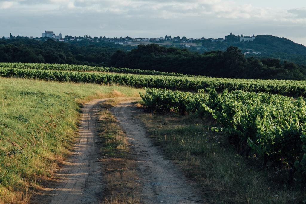 Domaine Merceron Martin_ le chemin qui longe les vignes coteaux ancenis